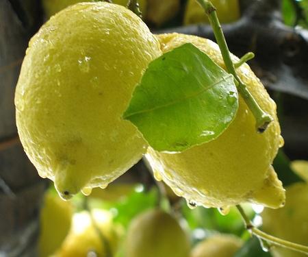 Il limone: amico della salute e della bellezza!