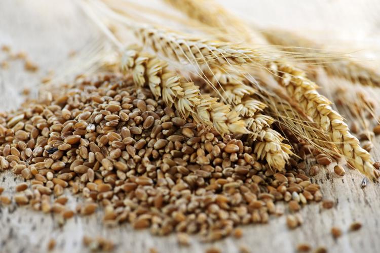 L'uso dei cereali nella dieta. Conferenza 'vegana'...