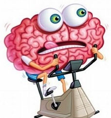 cervellino