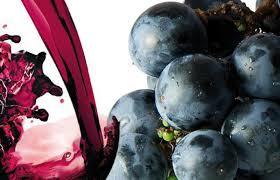 Quando il vino è stile di vita.......